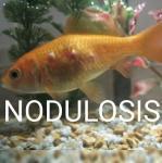 Nodulosis