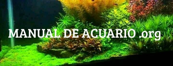 Manual de acuario de la comunidad Aqua Internacional Friends