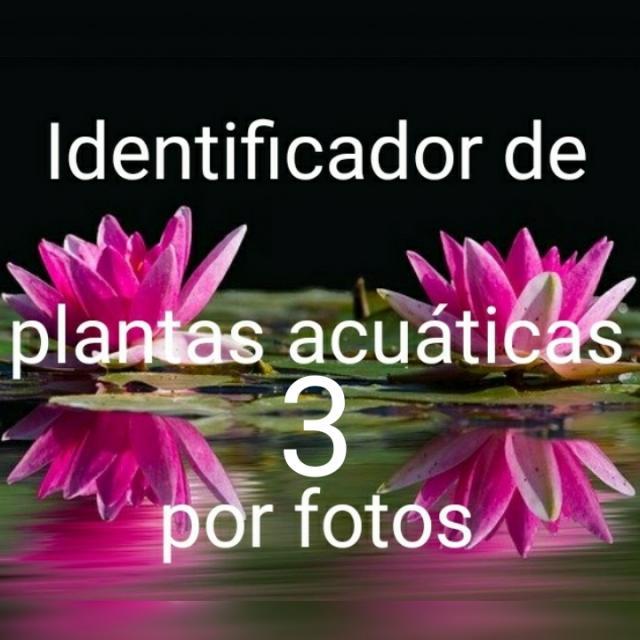 Image 20191231 234804