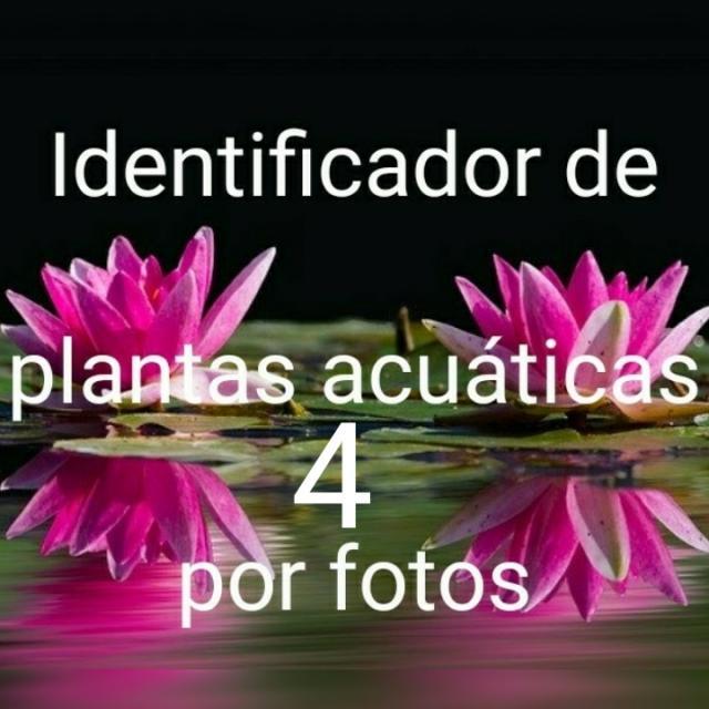 Identificador de imágenes plantas por fotos 4
