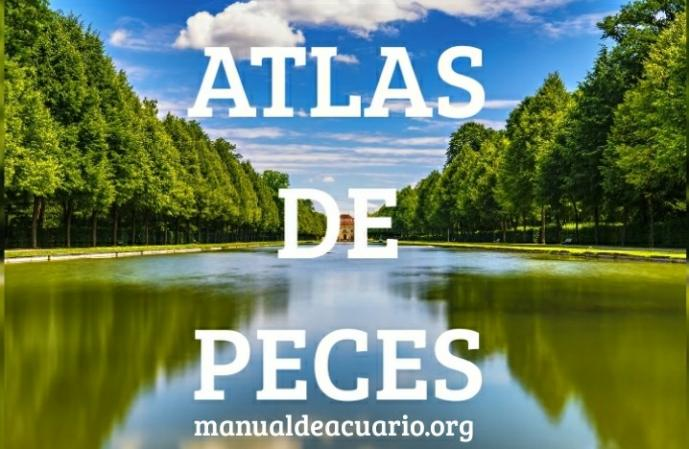 Atlas de especies de peces de AQUA INTERNACIONAL FRIENDS