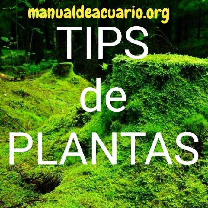 Tips de plantas acuáticas