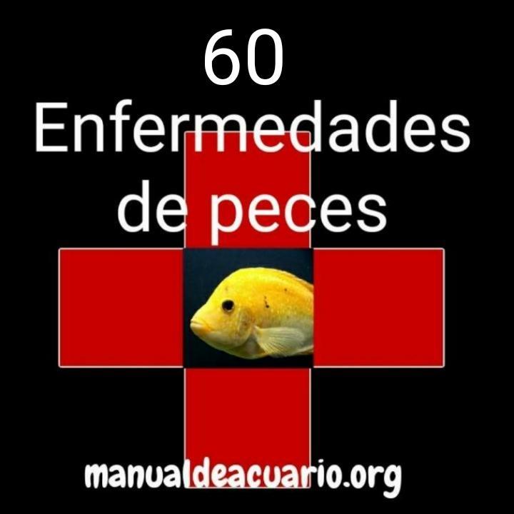 Enfermedades de peces ( 60 )