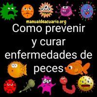 Como prevenir y curar enfermedades de peces