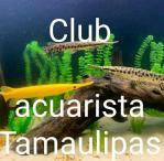 Club acuarista Tamaulipas