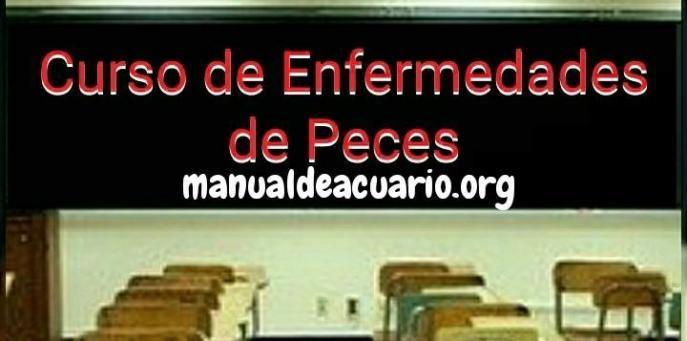Curso de enfermedades de Peces de Aqua Internacional Friends