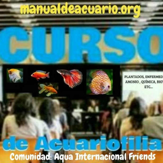 Curso de Acuariofilia de la comunidad Aqua Internacional Friends