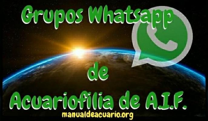 Grupos Whatsapp de acuariofilia de Aqua Internacional. Friends