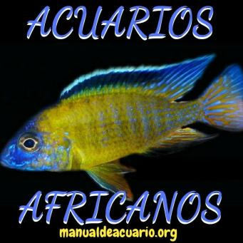 Grupo Whatsapp acuarios africanos