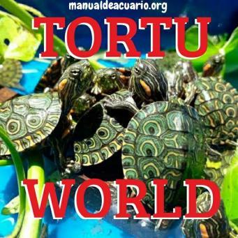 Grupo TORTU WORLD