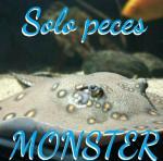 Grupo Whatsapp sólo peces monster