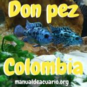 Grupo Telegram Don Pez Colombia
