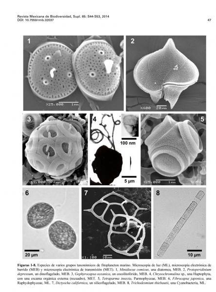 Plancton vegetal