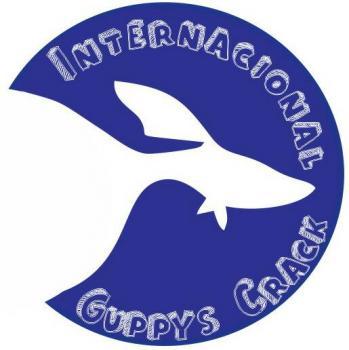 Internacional guppy crack 20190921 025836