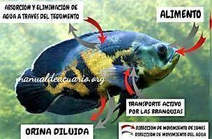 Osmosis en acuario 1