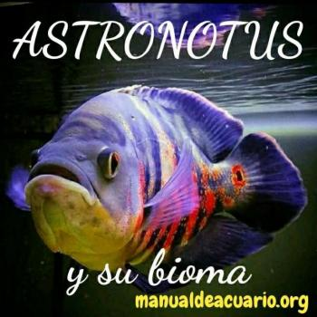 Grupo Whatsapp peces Oscar o Astronotus de Aqua Internacional Friends