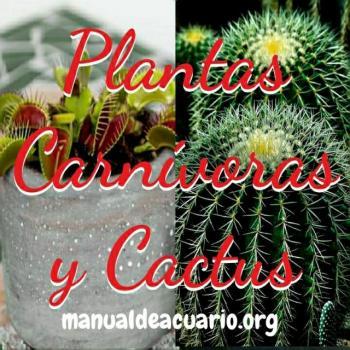 Planta carnivora y cactus 20190921 034958