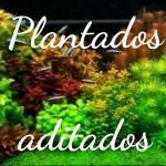 Grupo de plantados aditados