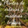 Plantas de exterior y maderas toxicas