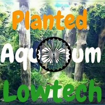 Planted aquarium lowtech 20181223 201142