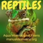 Reptiles comunidad aquaif 20190408 224637
