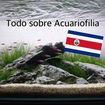 Todo sobre acuariofilia costa rica 20190408 221101